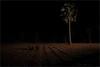 waiting, hafeshwar (nevil zaveri (thank U for 15M views:)) Tags: zaveri people india hafeshwar rural tribal village tree trees woman women dark night dusk photography photographer images photos blog stockimages photograph photographs nevil nevilzaveri stock photo gujarat gujrat palm waiting wedding procession