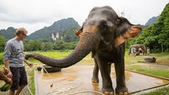 Thailand2018-91 (Wizza_Wozza) Tags: thailand khao sok koh samui bangkok hills elephant holiday
