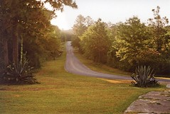 The Country Road (bongo najja) Tags: fl cantonment m3 leica