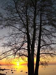 Sunset. (presteza777) Tags: sun sunset sky cielo clouds nuvole nuages puestadelsol coucherdusoleil tramonto stpeterburg petergof alexandriapark parkalexandria coast thegulfoffinland reflection reflexion silhouette trees берег море залив закат финскийзалив александрия петергоф russia небо облака солнце деревья seascape orange