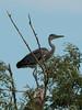 101_0415 (Elisabeth patchwork) Tags: bird reiher heron vienna wasserpark floridsdorf