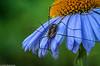 Botanischer Garten - Spinne in Lauerstellung (J.Weyerhäuser) Tags: tropfen botanischergarten blumen spinne spider animal insect insekt