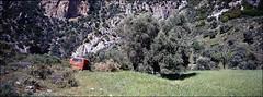 ich bin ein mohn, ich bin ein mohn (fluffisch) Tags: fluffisch crete kreta platania ida greece hasselblad xpan panorama 45mmf40 rangefinder messsucher analog dia slide fuji fujichrome velvia100 autaut
