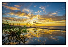 Vraiment un temps magnifique aujourd'hui... (Laurent Asselin) Tags: soleil sunrise leverdesoleil aube couleurs lumière reflets eau plante herbe ciel nuages paysage landscape guyane kourou