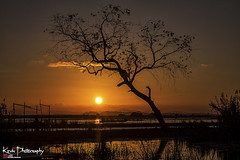 FXT11928 (kevinegng) Tags: thailand phatthalung thalenoi sunset dusk lateafternoon silhouette tree lonelytree colourful sunnyday lake sun