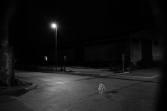 Which way? (MarxschisM) Tags: bw night street dog lonely darkness noir barxeta