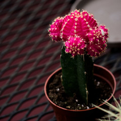 (vmb1321) Tags: cactus cacti plant plants