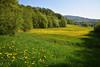 Quand la prairie fleurie (Excalibur67) Tags: nikon d750 sigma globalvision 24105f4dgoshsma paysage landscape nature printemps prairie campagne arbres trees foréts flowers fleurs forest