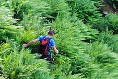 L'Ultimo Ostacolo (Roveclimb) Tags: montagna mountain alps alpi muncech escursionismo hiking trekking casenda paiedo berlinghera zania forcelladellazania valmilano altolario valchiavenna sorico felce fern felci ferns forest foresta wood bosco nature natura