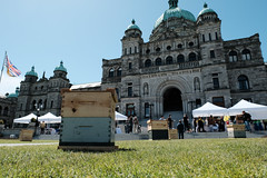 Day of the Honey Bee (BC Gov Photos) Tags: agriculture condiments buylocal food beebc honey bees buybc beekeeping
