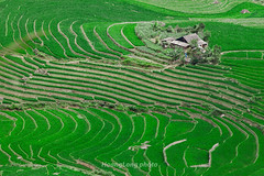 _J5K0649.0617.Sáng Ma Sáo.Bát Xát.Lào Cai (hoanglongphoto) Tags: asia asian vietnam northvietnam northeastvietnam landscape scenery vietnamlandscape vietnamscenery vietnamscene terraces terracedfields terracedfieldsinvietnam transplantingseason sowingseeds hdr walley house green canon canoneos1dsmarkiii canonef200mmf28liiusm đôngbắc làocai bátxát sángmasáo phongcảnh ruộngbậcthang ruộngbậcthangbátxát mùacấy bátxátmùacấy sángmasáomùacấy thunglũng xanh ngôinhà