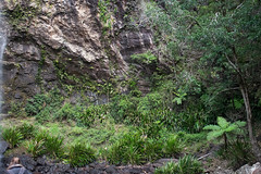 Australia_2018-214.jpg (emmachachere) Tags: subtropical trees hike waterfall boatride springbrook australia rainforest kanagroo animals koala brisbane boat lonepinekoalasanctuary