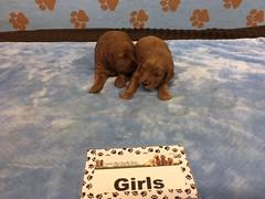 Shyanne Girls pic 4 6-10