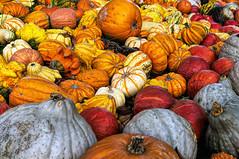 Pumpkins (Bephep2010) Tags: 2016 30mm 30mmf28exdn farbe herbst juckerhof kürbis nex nex6 schweiz seegräben sigma sony stillleben switzerland zurich zürich autumn catchy color colour pumpkin stilllife ch