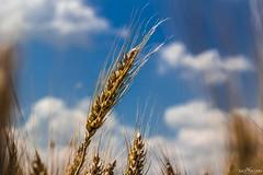 Scorci di inizio Estate (Luca Nacchio) Tags: scorci estate campagna modena cielo azzurro nuvole views summer hills sky light blu clouds