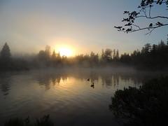 Have a nice weekend (Yolanta Z) Tags: mist fog ducks