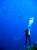 IMG_0041 (stevefenech) Tags: south pacific islands travel adventure stephen steve fenech fennock micronesia pohnpei kolonia under underwater scuba barracuda
