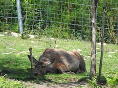 DSCN0388 (SiegmundB) Tags: parc animalier des monts de gueret