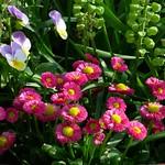 Ein Frühlingsgruß thumbnail