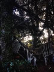 Ramshackle (lisafelmingham) Tags: landscapes moody ruralaustralia forgottencorners bush outbuildings derelictbuilding farm ruralsetting ivy trees overgrown morningtonpeninsula mainridge countryside darkwoods ruinousshed ramshackle
