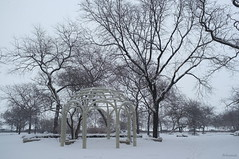 Chicago III #The garden (Juca.pt) Tags: jucapt 2014 chicago chicagoiii gardens trees