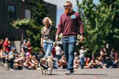 PugCrwal-143 (sweetrevenge12) Tags: pug parade crawl brewing sony pugs dog pet