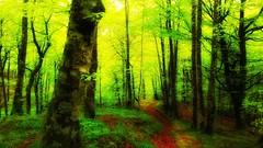Bosque 6 (jumaro41) Tags: árbol bosque deporte ejercicio eugi navarra green hojas life monte montaña mountain naturaleza natural nature paseo rio ramas sendero senderismo troncos tree verde vida madera arroyo hierba río carretera senda jardín suelo parque