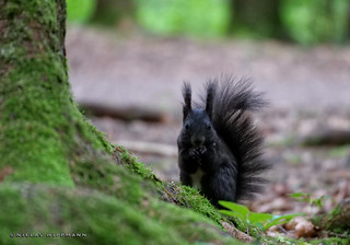 Neulich im Eichhörnchenwald