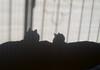 Hermanas (angeliquita) Tags: gatos cats pets mascotas sombras par dos hermanas xicayniña