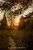 20180531-IMG_9594-WM (Pamela McLellan Zmija) Tags: beachlife cottagelife goblesgrove june2018 pamelamclellanzmija portelgin saugeenshores sunset sunsetphotography landscape landscapephotography yourlifeasartessentials yourlifeasart momlife pcosmom adhdmom