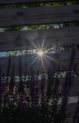 Ögonkontakt med solen (My Photolifestyle) Tags: fs180603 ögonkontakt fotosondag solstrålar solen sun