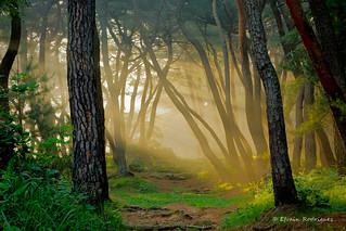 Samreung Forest I
