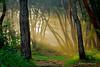 Samreung Forest I (Efrain_Rodriguez) Tags: landscape paisaje green verde nature naturaleza trees arboles light luz dawn amanecer yellow amarillo forest bosque
