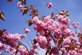 Mountaintop blossoms