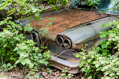 Ford Edsel (John Diven) Tags: classic car abandon abandoned america auto automobile beautiful beauty cars classiccar forgotten freehand goldenhour golden historic history interesting explore explorer ecue exploring maryland md midatlantic nikon old outdoors outside overgrown past rust rusted rusting rusty soft tamron texture wideangle outdoor