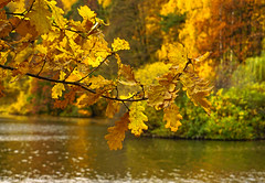 Oak branch / Дубовая ветвь (Vladimir Zhdanov) Tags: nature autumn october landscape russia moscow tsaritsyno pond park forest tree wood leaf water oak
