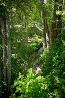 Bowker Creek