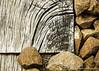 Ballast (patoche21) Tags: arbre bourgogne bourgognefranchecomte cotedor chevignystsauveur europe flore france nature naturemorte photographie plante bois graphisme texture patrickbouchenard burgundy graphic wood abstrait abstract