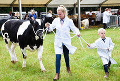 Teach 'em Young (littlestschnauzer) Tags: cattle youngster lad boy ring showring cow judging showing animal farm farming training family 2018 june west yorkshire huddersfield life class showground fresian