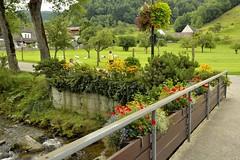 _DSC3640 (SLVA49) Tags: rio piedras agua flores puente faroña ovejas campo casas nikon df 35mm
