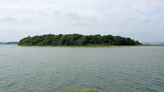 Green Island in June 2018, Poole Harbour, Poole, Dorset. England.