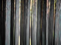 baltic forest (szélléva) Tags: baltic forest trees nature abstract icm intentionalcameramovement