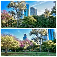 Brisbane CBD (Lance # Australian photographer) Tags: buildings skyscraper park colour flowers trees outdoor