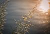 Awaking Day. (Omygodtom) Tags: sunrise sunshine river happy riverplace tamron90mm grass art abstract time scene scenic senery setting