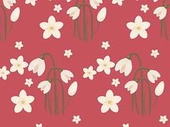 flores fucsia (sofiandrade) Tags: blumen flores flowers rosa rosado pink