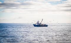 Fishing Boat (vs_foto) Tags: atlantic birds boat boot canon canon7d fischer fischerboot fisher fishing galicia landscape landschaft meer möwen ocean seagulls spain spanien wasser water