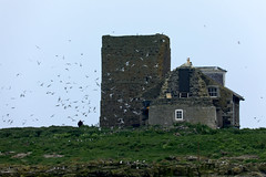 Grace Darling's home on Brownsman Island (CEWWtyke) Tags: grace darling house home building ruin dilapidated island farne islands grass shore stones rocks sky birds person man nature wildlife landscape outdoor national trust uk england northumberland great britain countryside remote seabirds