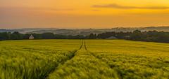 la rade de brest (adilemoigne) Tags: brittany bretagne france la rade de brest daoulas baie pelouse ciel arbre coucher soleil champ personnes sur des