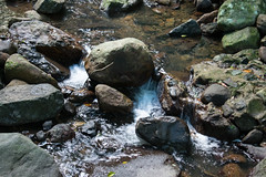 Australia_2018-120.jpg (emmachachere) Tags: subtropical trees hike waterfall boatride springbrook australia rainforest kanagroo animals koala brisbane boat lonepinekoalasanctuary