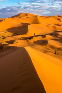 Tall Sands